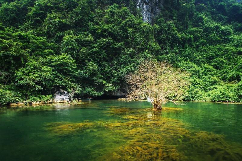 Nước trong xanh nhìn tới đáy tại Tràng An